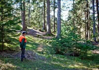 Forstwirtschaft Knapp in Rinegg - Holzwelt Tour Murau