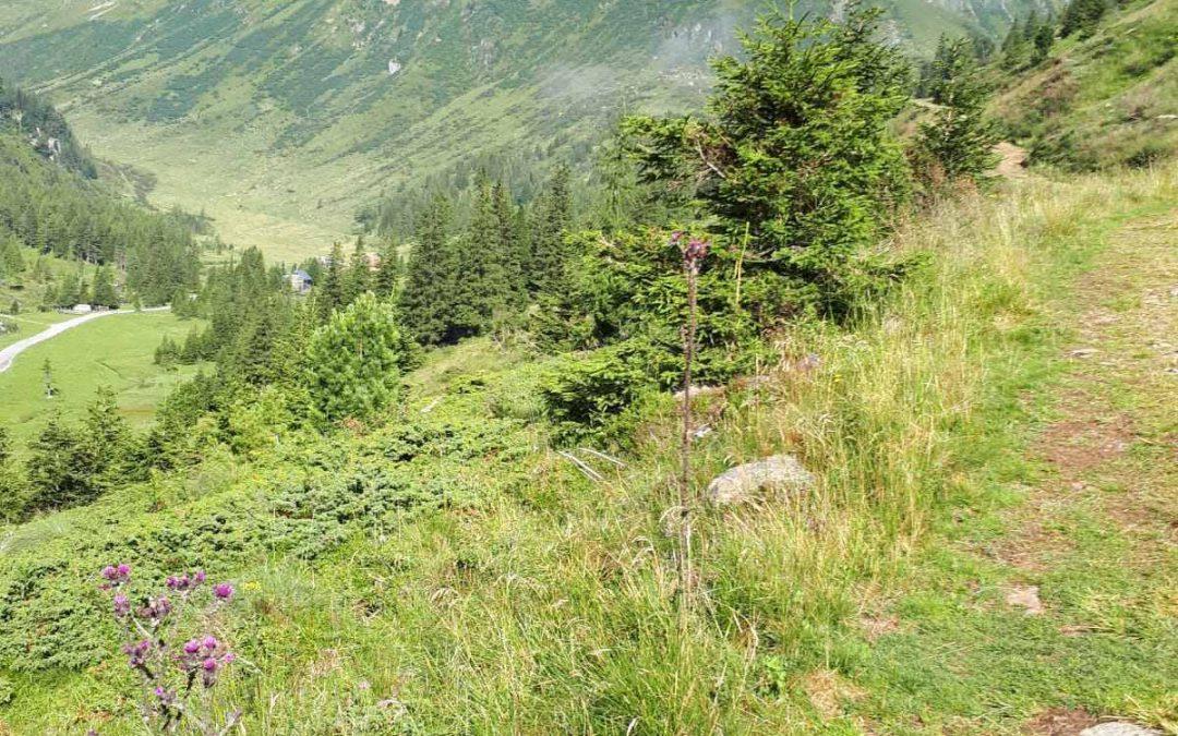Murauer Bergwelten – Funklsee